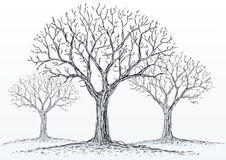 leafless trees Stock Images