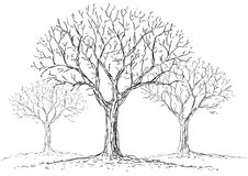 Leafless trees. Illustration of a leafless trees in the fog Stock Images