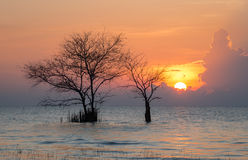 Leafless trees in the lake. And morning sun at Pakpra, Phatthalung stock photos