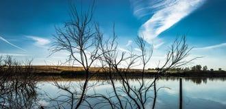 Leafless trees on lake shore Stock Image