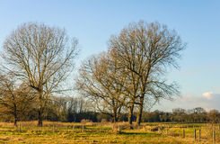 Leafless trees and many fences in a rural landscape Stock Images