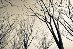 Leafless trees. In monotone color royalty free stock image