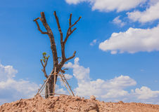 Leafless trees planted Stock Photos