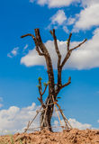 Leafless trees planted Stock Photo