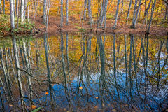 Leafless trees and reflection. Leafless trees and reflection in autumn season, Japan stock photos