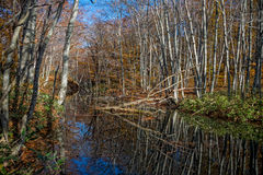 Leafless trees and reflection. Leafless trees and reflection in autumn season, Japan royalty free stock photography