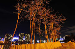 Leafless trees rendered by yellow colored lights at night Stock Images