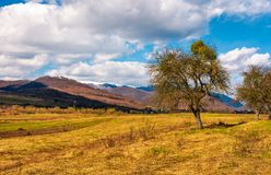 Leafless trees on the rural field in mountains. With snowy tops. beautiful countryside springtime scenery on a sunny day with some clouds on a blue sky Royalty Free Stock Photos