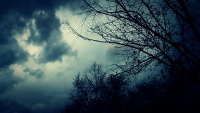 Leafless trees silhouetted and blowing in the wind. stock footage