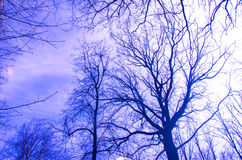 Leafless trees silhouettes Stock Image