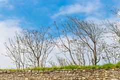 Leafless trees and the sky Stock Photos
