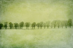 Leafless trees on a snow field stock photography