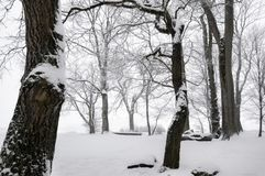 Leafless trees and snow. Winter scenery in the forest with leafless trees covered in snow, on a gloomy day of February, near Schwabisch Hall, Germany royalty free stock photography
