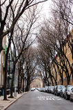 Leafless trees tunnel on street in Brooklyn. Quiet street in a residential neighborhood of Green Point in Brooklyn, New York, many cars parked near the edge of royalty free stock photos