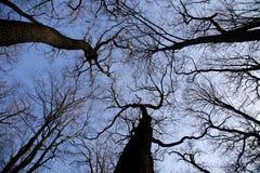 Leafless trees Stock Photos