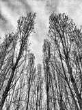 Leafless trees in winter Stock Image