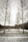 Leafless Trees Winter Royalty Free Stock Photography
