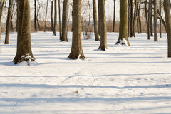 Leafless trees in the winter in the snow.  stock photography