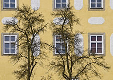 Leafless trees before a yellow facade Royalty Free Stock Images