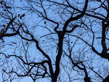 Leafless treetop. Stock Photography