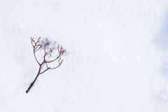 Leafless twig fall on snow - with space for text, word area. Tiny leafless berry branch fall on snow Royalty Free Stock Photo