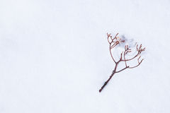 Leafless twig fall on snow - with space for text, word area. Tiny leafless berry branch fall on snow Royalty Free Stock Image
