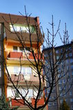 Leafless twigs. Leafless tree by buildings stock photography