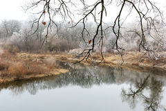 Leafless twin above river Stock Photography