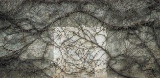 Free Leafless Vine Melancholic Background Stock Photo - 30371140