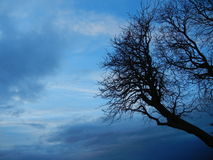 Leafless Winter Tree. A Leafless Tree with a winter storm approaching stock photos