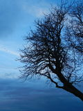 Leafless Winter Tree Royalty Free Stock Photography