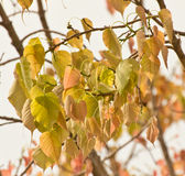 Leaflet. Leaves when we look and feel refreshed Royalty Free Stock Images