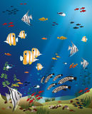 Leaflet width tropical fishes bottom of the ocean Royalty Free Stock Image