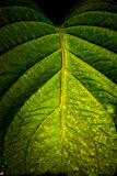 leafmakro Arkivbild