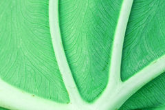 leafmakro royaltyfria bilder