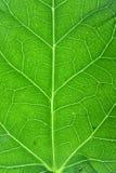 leafmakrovertical royaltyfria bilder