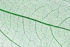 leafmakrowhite Royaltyfri Fotografi