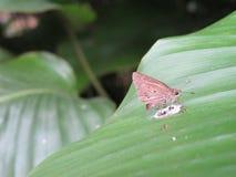 leafmal som klibbas till Royaltyfri Bild
