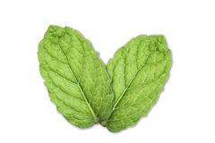 leafmint Royaltyfria Foton