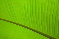 leafmodeller Arkivbild