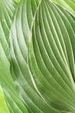 leafmodellfjäder Royaltyfria Bilder