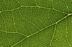 leafnätverk Arkivfoton