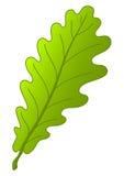 leafoaktree Fotografering för Bildbyråer