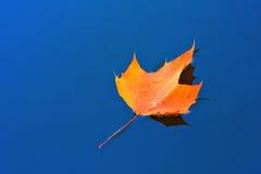 leaforange Arkivbilder