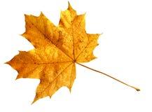 leaforange Royaltyfria Foton