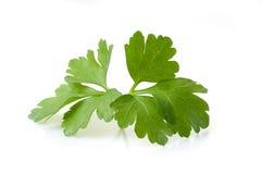 leafparsley Fotografering för Bildbyråer