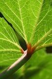 leafpumpa Royaltyfria Foton