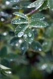 leafraindrops Royaltyfri Foto