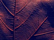 leafred Royaltyfri Foto