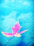 leafred Royaltyfri Fotografi